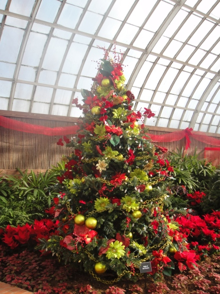 tree in conservatory