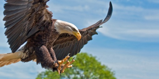 highly-effective-habits-of-eagles