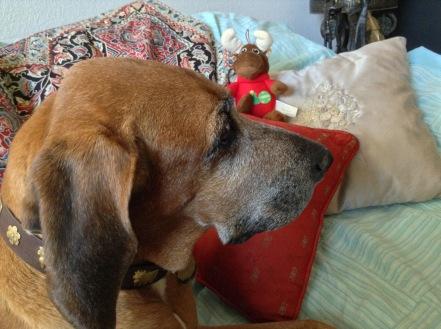 Artemisia the wonder hound