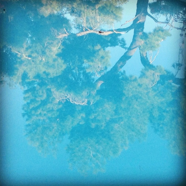 reflection in my pool