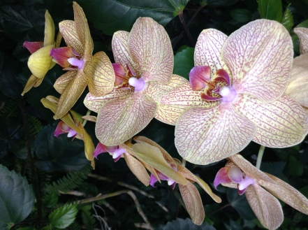 orchids #tropical