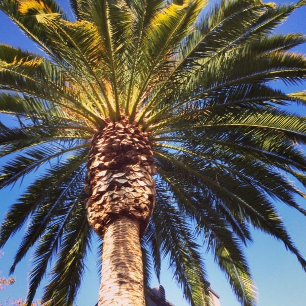 Palm, symbol of victory