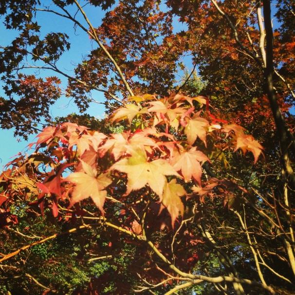 the 'Burgh in fall