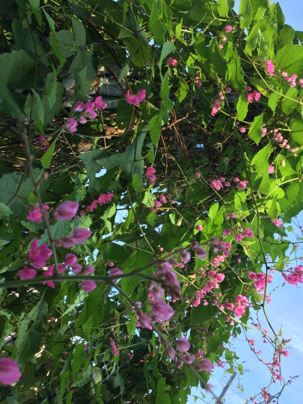 fall flora in Tucson