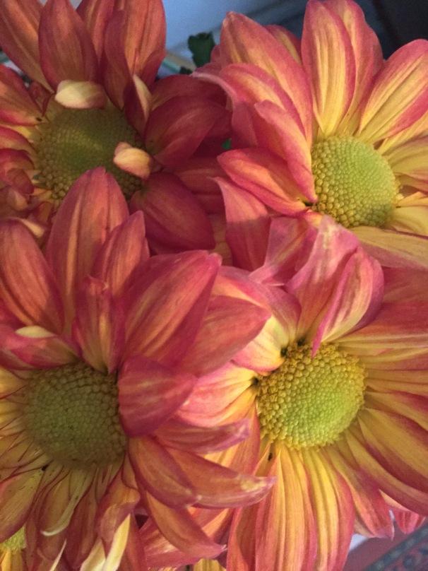 fall flora