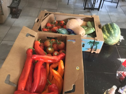 my produce haul
