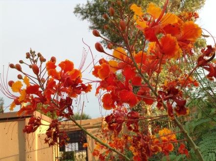Tucson color