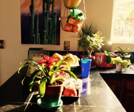 kitchen bromeliad