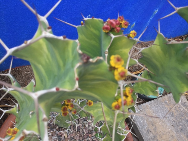 thorny issue